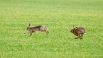 Speed - Hare - Cliff May 2.jpg